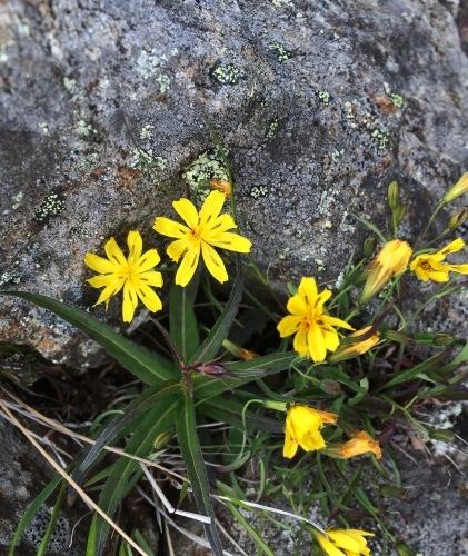 植物とか植物とか植物とか。_c0369344_12040580.jpeg
