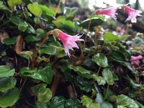 植物とか植物とか植物とか。_c0369344_12162554.jpeg