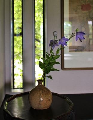 花だより 桔梗_a0279848_16553319.jpg