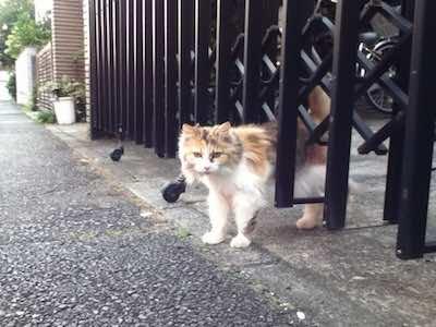 地域猫ではありません_b0002954_9491631.jpg