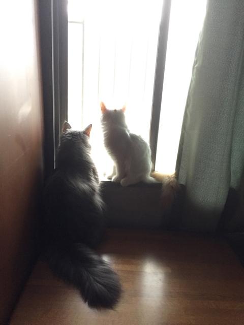 ウーラちゃんもやってきて、ふたり仲良く外を見ています。_e0356356_17500061.jpg