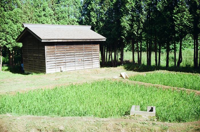中山久蔵の稲作実験_c0182775_1911989.jpg