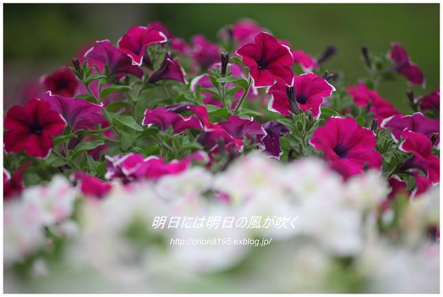 f0361079_12102595.jpg