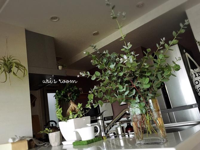 フローラ × アナベルが可愛い!そしてユーカリのドライフラワーを作りたい(´∀`)_a0341288_18450764.jpg