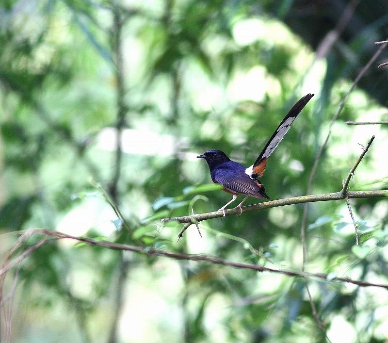 台湾鳥見旅行(その7)・・・_c0213607_20050966.jpg