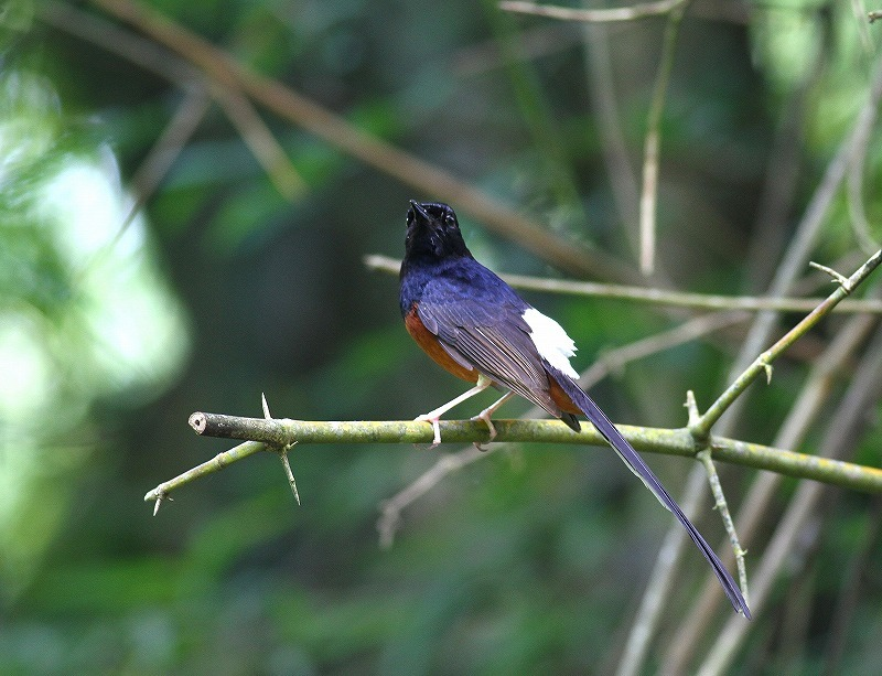 台湾鳥見旅行(その7)・・・_c0213607_20051892.jpg