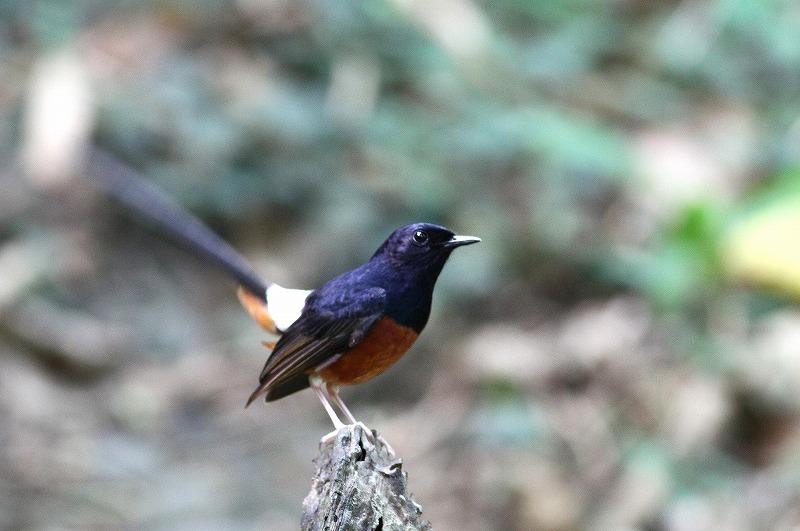 台湾鳥見旅行(その7)・・・_c0213607_20052282.jpg
