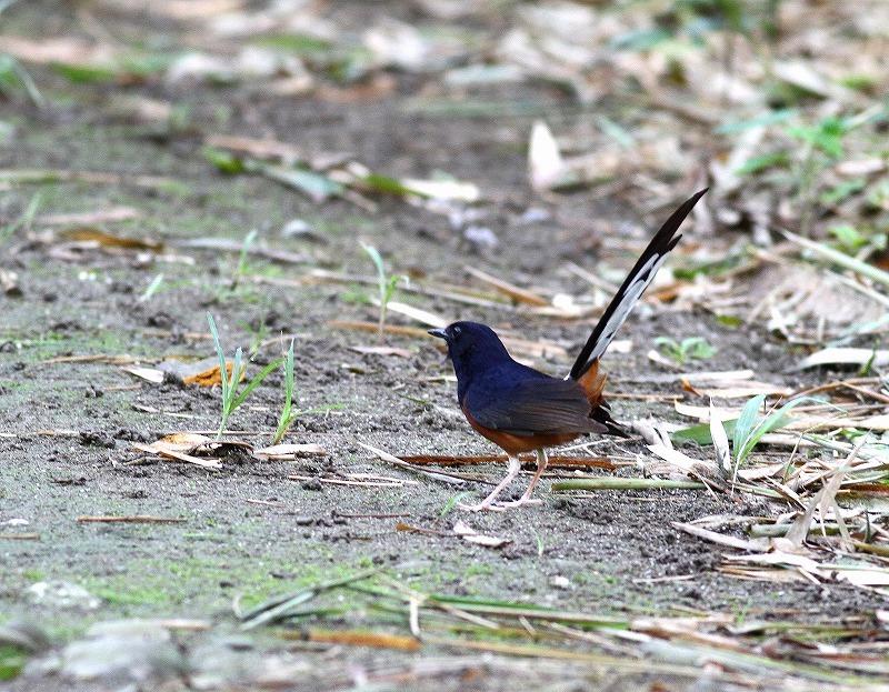 台湾鳥見旅行(その7)・・・_c0213607_20052797.jpg