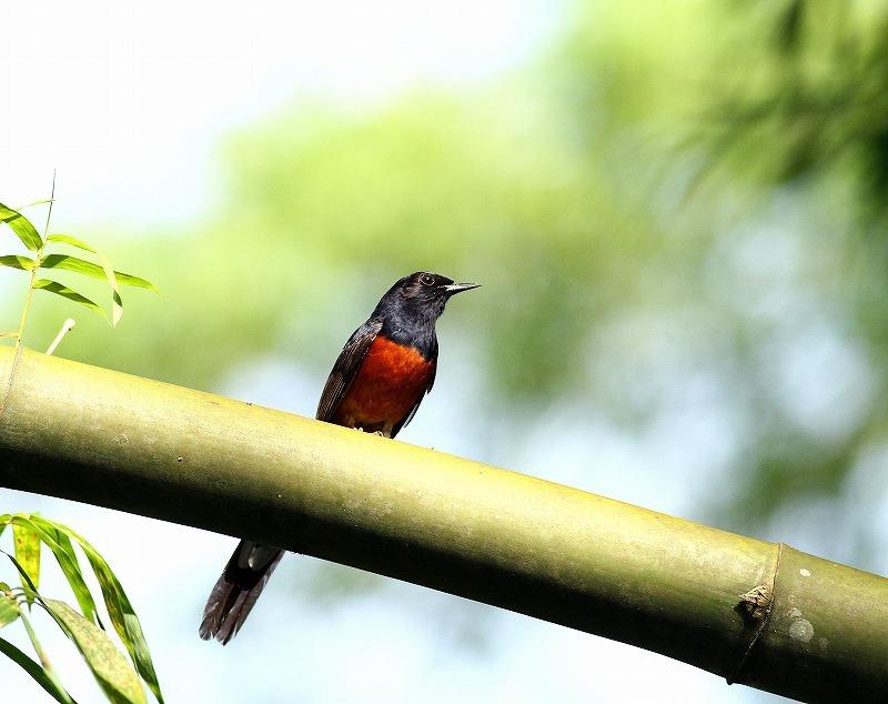 台湾鳥見旅行(その7)・・・_c0213607_20053184.jpg