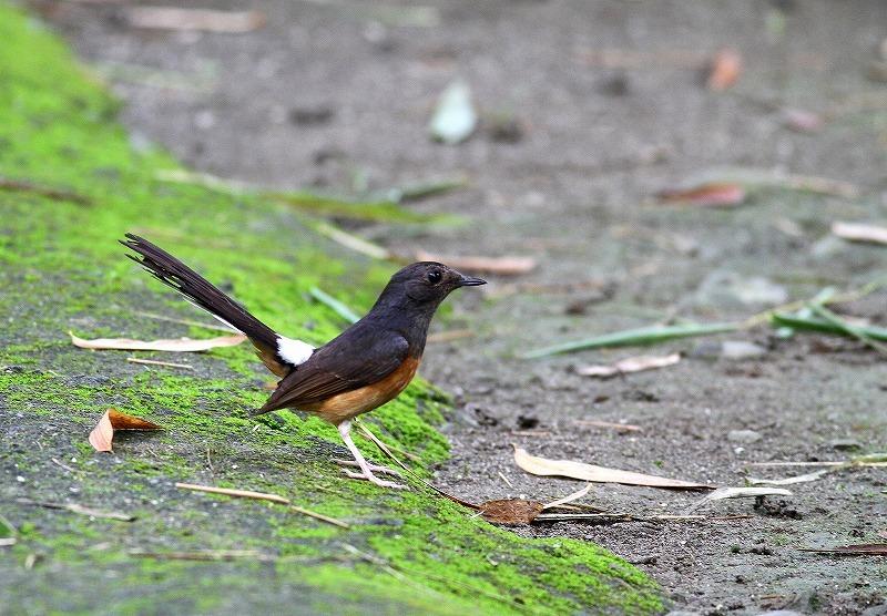 台湾鳥見旅行(その7)・・・_c0213607_20061993.jpg