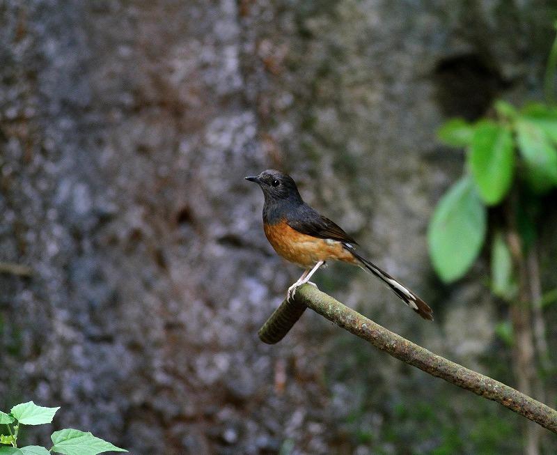台湾鳥見旅行(その7)・・・_c0213607_20063911.jpg