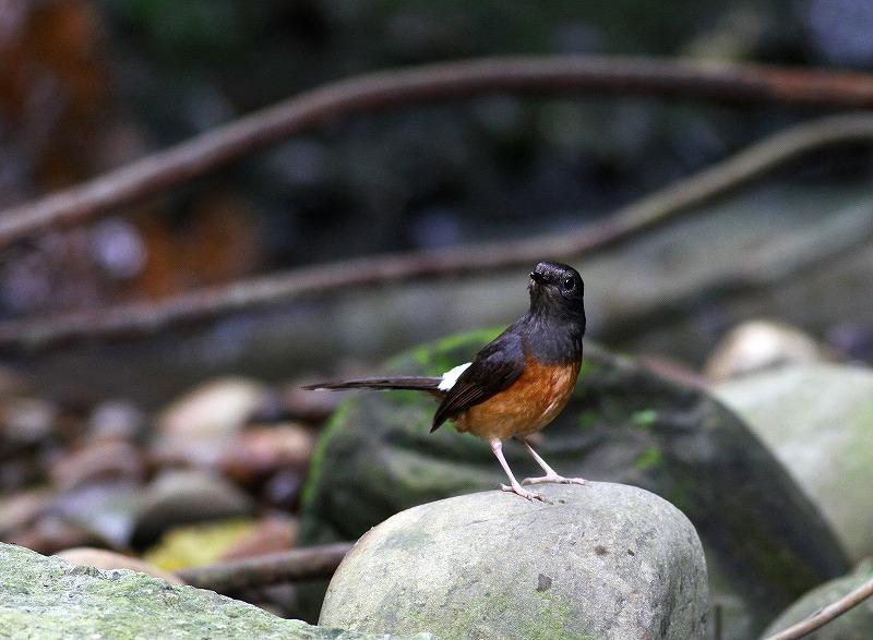 台湾鳥見旅行(その7)・・・_c0213607_20064473.jpg
