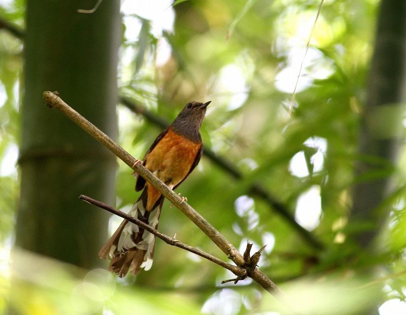 台湾鳥見旅行(その7)・・・_c0213607_20065158.jpg