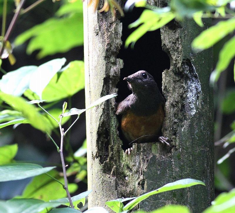 台湾鳥見旅行(その7)・・・_c0213607_20065761.jpg