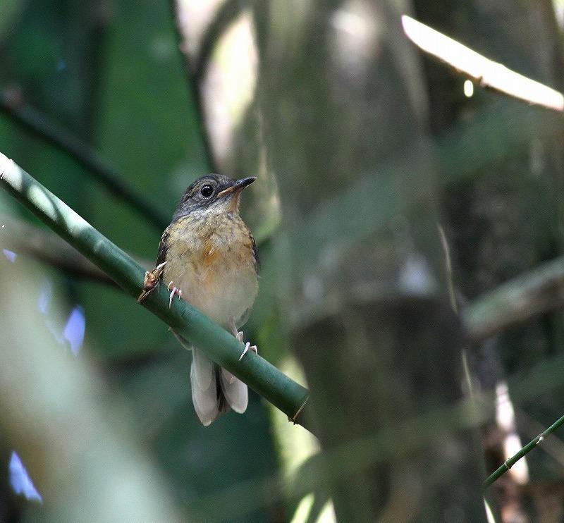 台湾鳥見旅行(その7)・・・_c0213607_20075412.jpg
