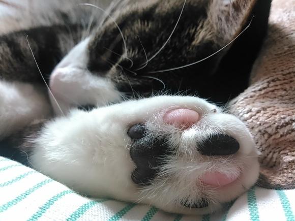 【猫】目の前に有ったんで_f0141609_11502600.jpg