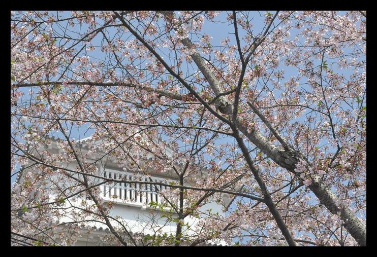 カープストリーマー 確定 福島_f0053218_233356.jpg