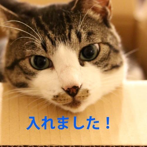 にゃんこ劇場「ぼく、できるもん」_c0366722_04394147.jpeg