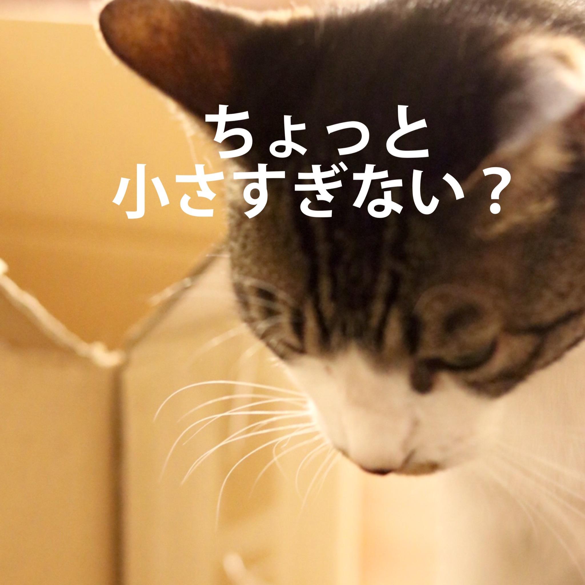にゃんこ劇場「ぼく、できるもん」_c0366722_04400537.jpeg