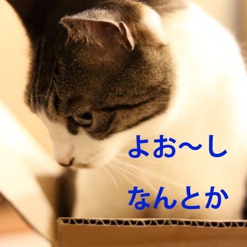 にゃんこ劇場「ぼく、できるもん」_c0366722_04403221.jpeg