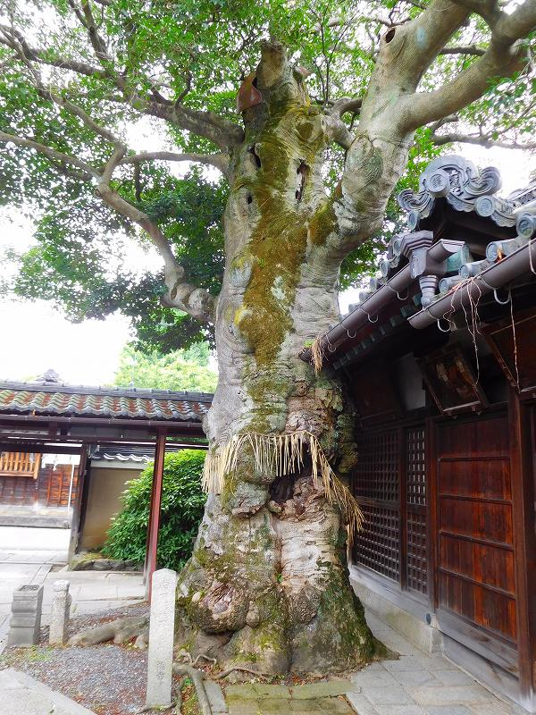 複合型本堂建築の代表例「浄福寺」20160615_e0237645_12411293.jpg
