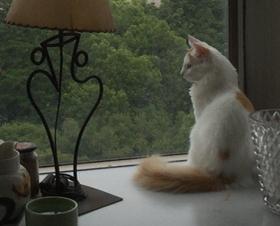 オルウェンくんは自宅の出窓にて。_e0356356_22061816.jpg