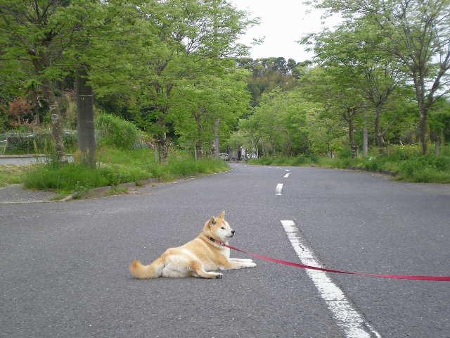 '16,6,30(木)カンナ街道に行ってみたYO!_f0060461_13501191.jpg