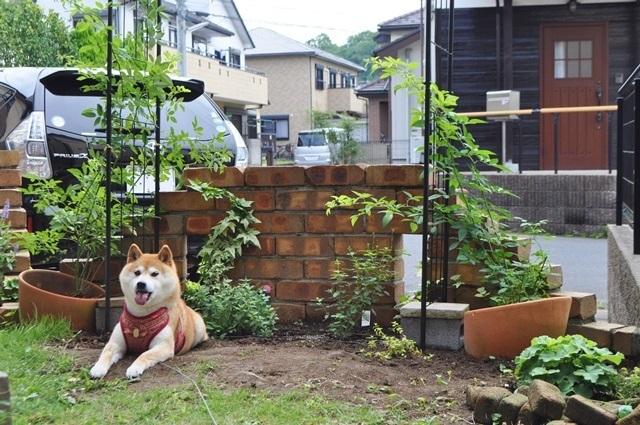 庭じゃない!_a0126590_23390365.jpg