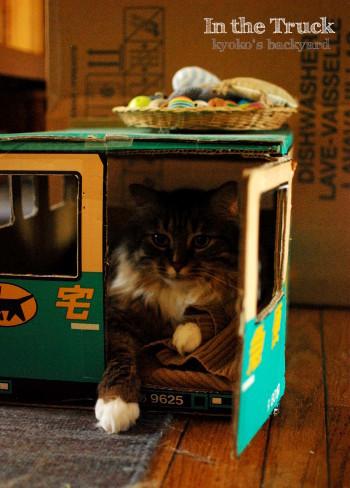 トラックの中の猫にちょっかい_b0253205_02235820.jpg