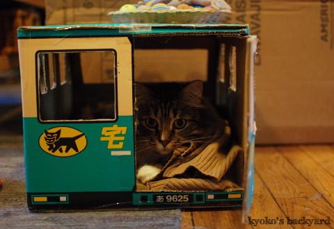 トラックの中の猫にちょっかい_b0253205_02241584.jpg