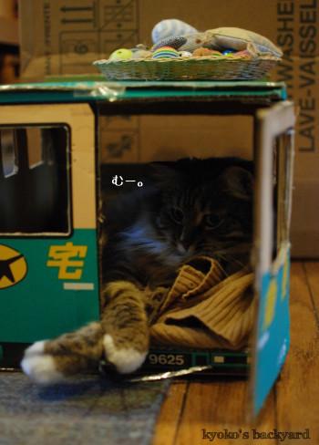 トラックの中の猫にちょっかい_b0253205_02260193.jpg