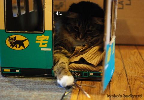 トラックの中の猫にちょっかい_b0253205_02304601.jpg