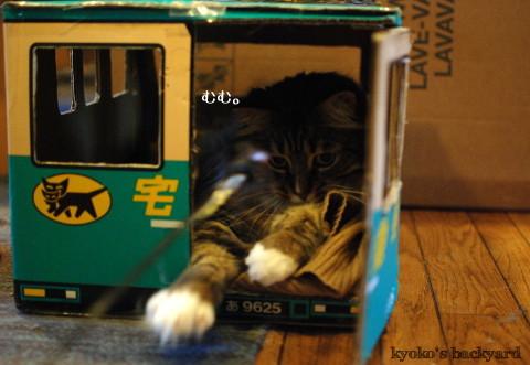 トラックの中の猫にちょっかい_b0253205_02305826.jpg