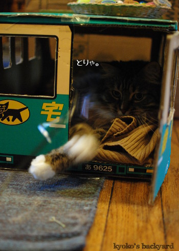 トラックの中の猫にちょっかい_b0253205_02314573.jpg