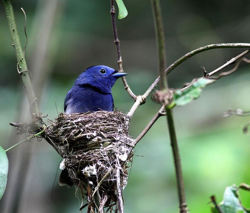 台湾鳥見旅行(その8)・・・_c0213607_20201454.jpg