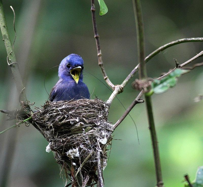 台湾鳥見旅行(その8)・・・_c0213607_20201915.jpg