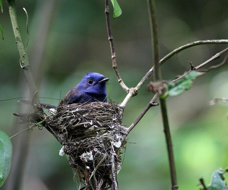 台湾鳥見旅行(その8)・・・_c0213607_20202443.jpg