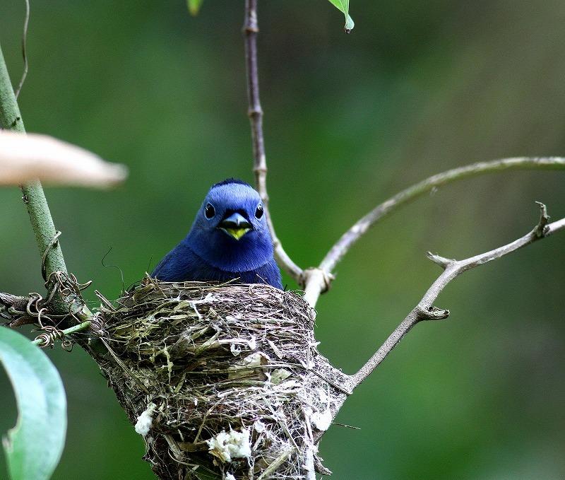 台湾鳥見旅行(その8)・・・_c0213607_20202870.jpg