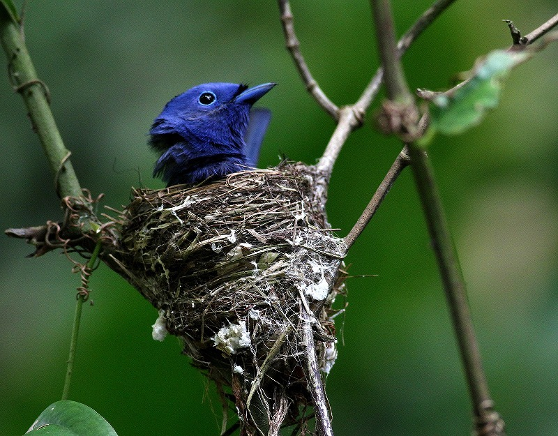 台湾鳥見旅行(その8)・・・_c0213607_20203481.jpg