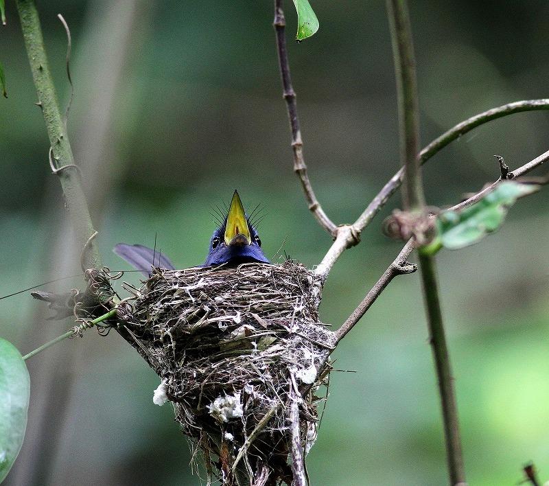 台湾鳥見旅行(その8)・・・_c0213607_20212018.jpg
