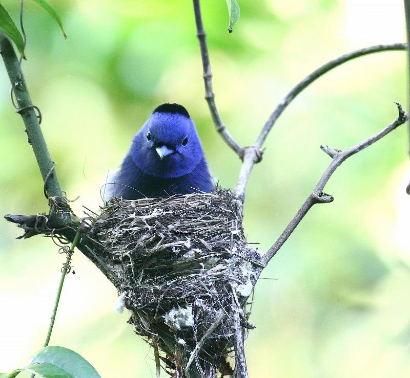 台湾鳥見旅行(その8)・・・_c0213607_20213309.jpg
