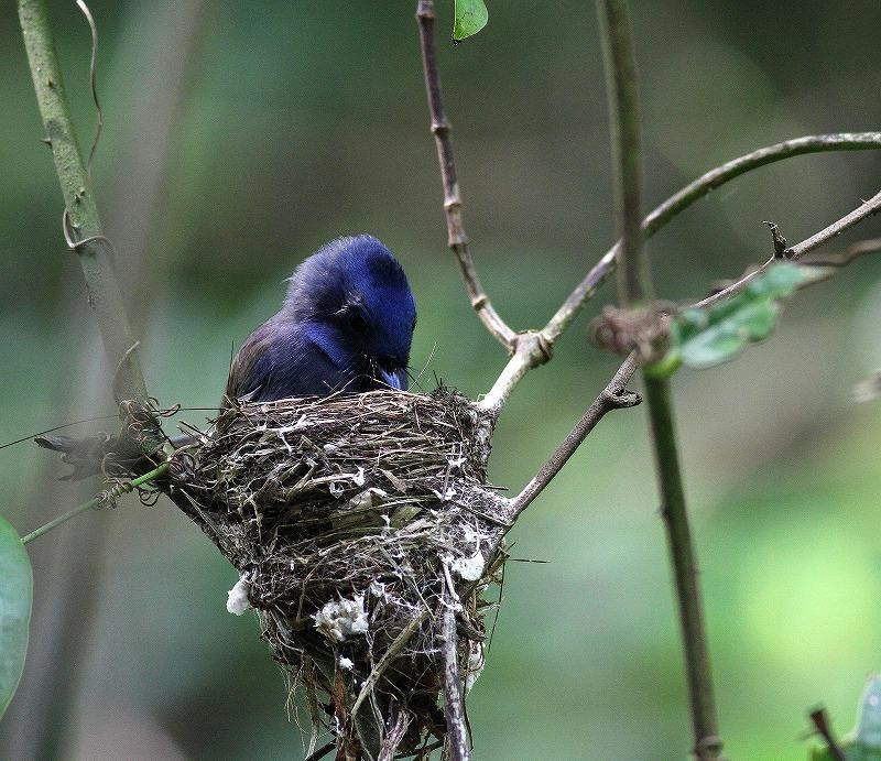 台湾鳥見旅行(その8)・・・_c0213607_20213779.jpg