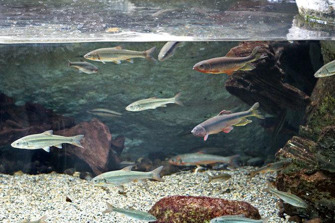 井の頭自然文化園・水生物館 「後編」_b0355317_10460403.jpg