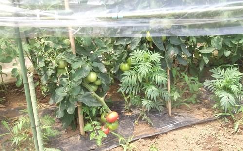 野菜の収穫...どうするよ~_b0137932_17488.jpg