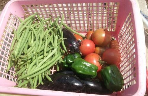 野菜の収穫...どうするよ~_b0137932_1752173.jpg