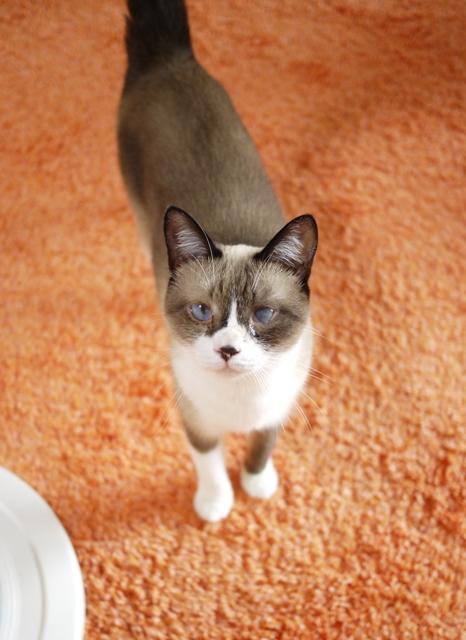 猫のお留守番 クーちゃん編。_a0143140_2224551.jpg