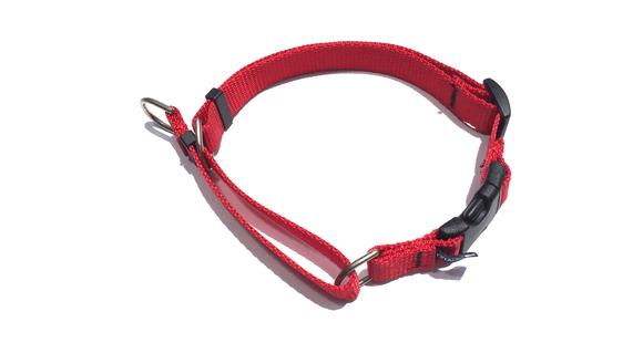CETACEA Soft Martingale Dog Collar シターシャ ソフト マーチンゲールカラー _d0217958_12155047.jpg
