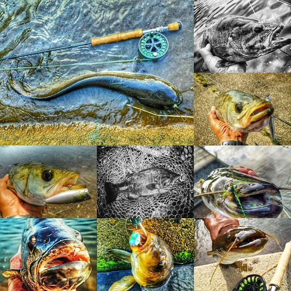 6月後半の釣り。そして7月へ。_c0006592_5281681.jpg