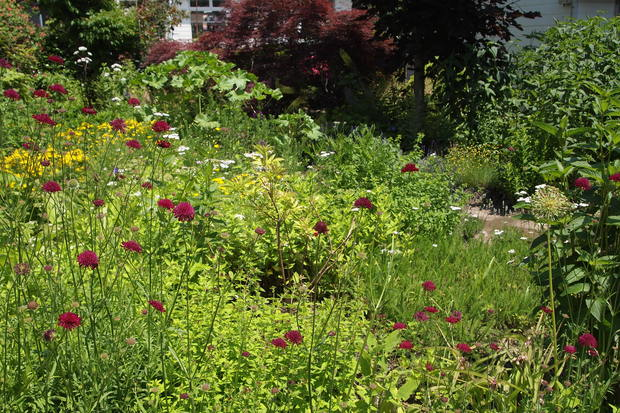 7月の園芸実習の日程_a0292194_20471452.jpg