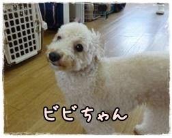 a0338800_20061736.jpg